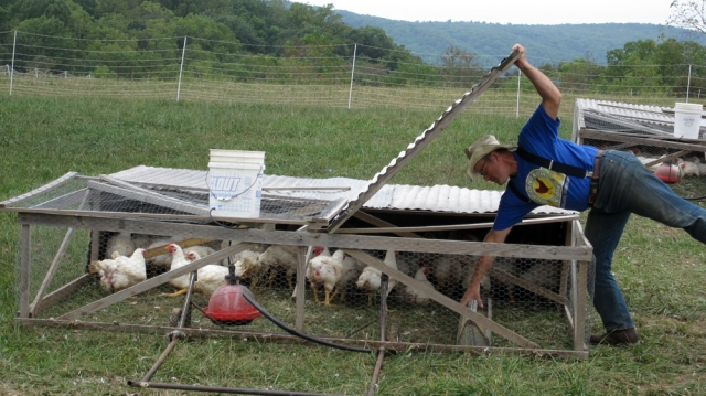 Joel Salatin of Polyface Farm in Staunton, Virginia is one of the leading farmers that first made chicken tractors famous. Credit: Margie Burks/Flickr