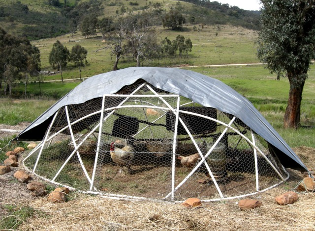 Oh, hello, geodesic chicken tractor. Credit: PermaCultured/Flickr
