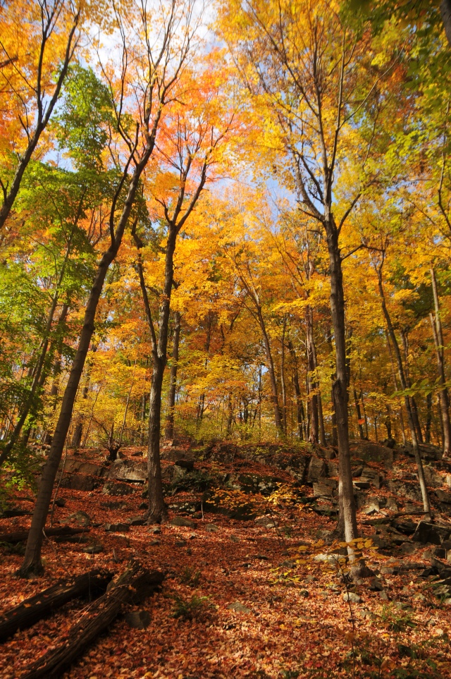leaf peeping in CT is not to be missed